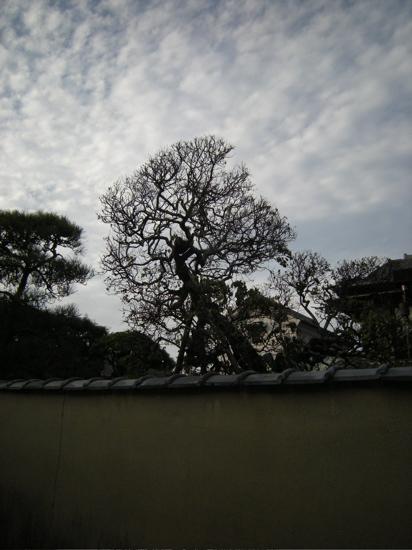 6.梅の木.jpg