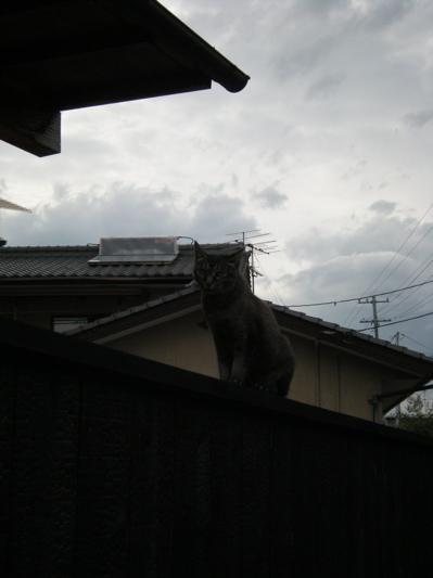 猫5.jpg