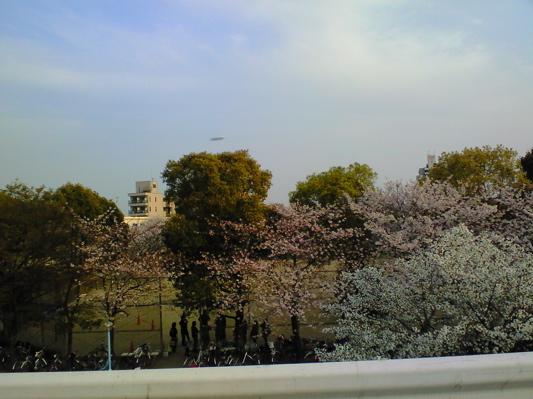 飛行船と桜.jpg